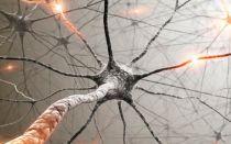 Вегетативная нервная система (ВНС)