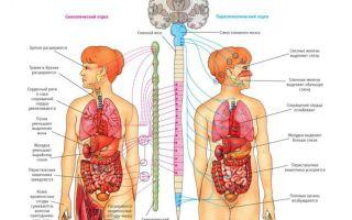 Что такое ВСД простыми словами, симптомы и методы лечения